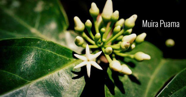 Understand Natural Ingredientsand their uses: Muira Puama