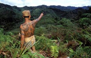 3a malaysian jungles